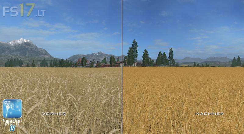forgotten-plants-wheat-barley-3