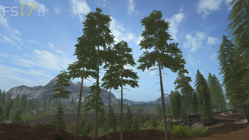 pines-1