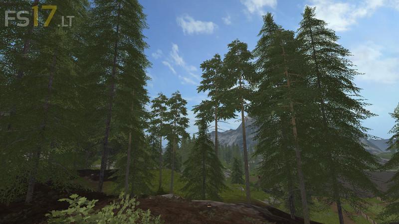 pines-5