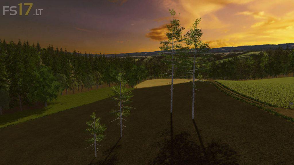 harvester-birch-1