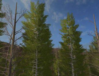 harvester-birches-1